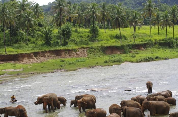 Elefanten Pinnawela