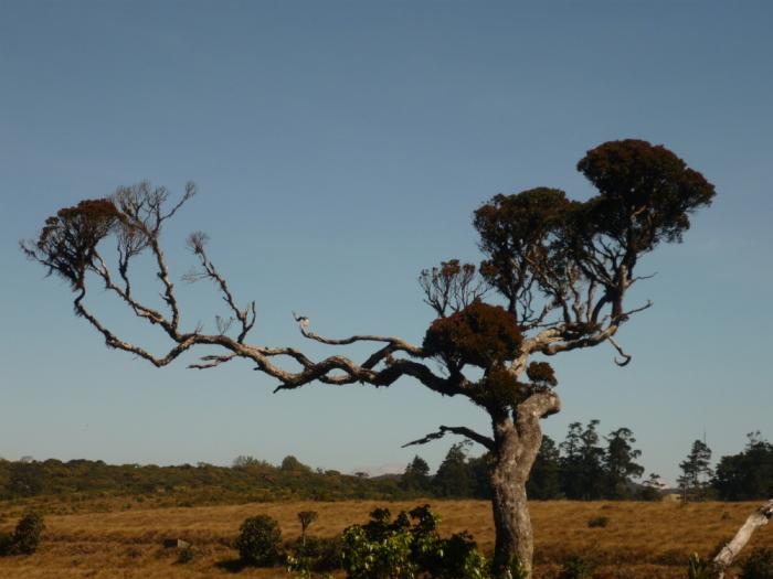 Vegetation Horton Plains