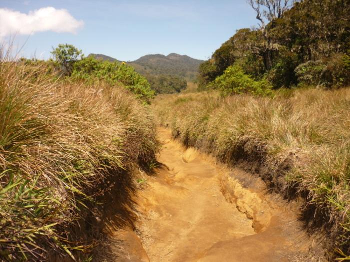 Typische Landschaft Horton Plains