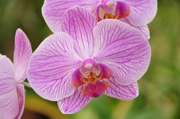 Orchidee Botanischer Garten
