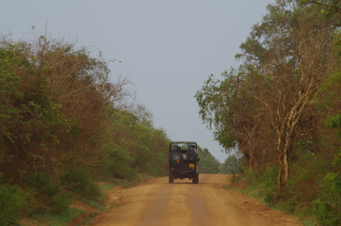 Jeep im Yala Nationalpark