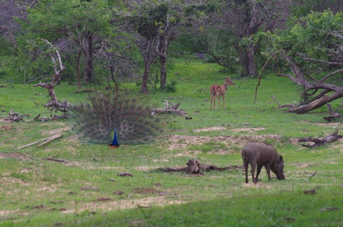 Trio im Yala Nationalpark