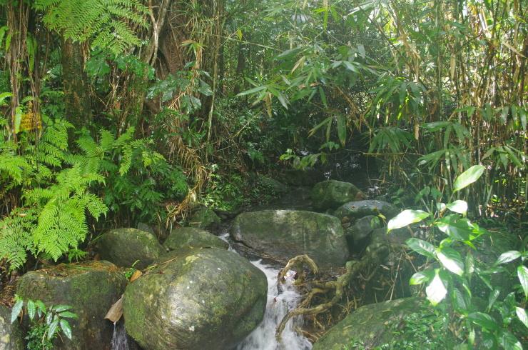Sinharaja Regenwald