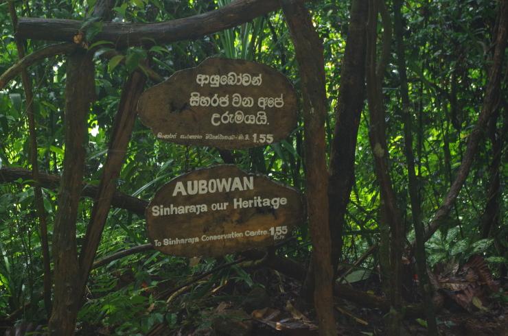 Sinharaja Regenwald Eingang